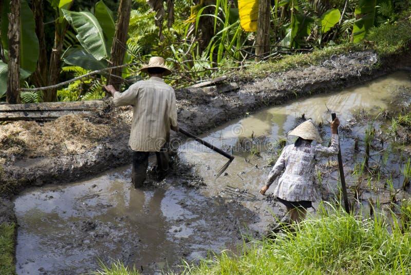 Cultivando o campo de almofada em Indonésia imagem de stock royalty free