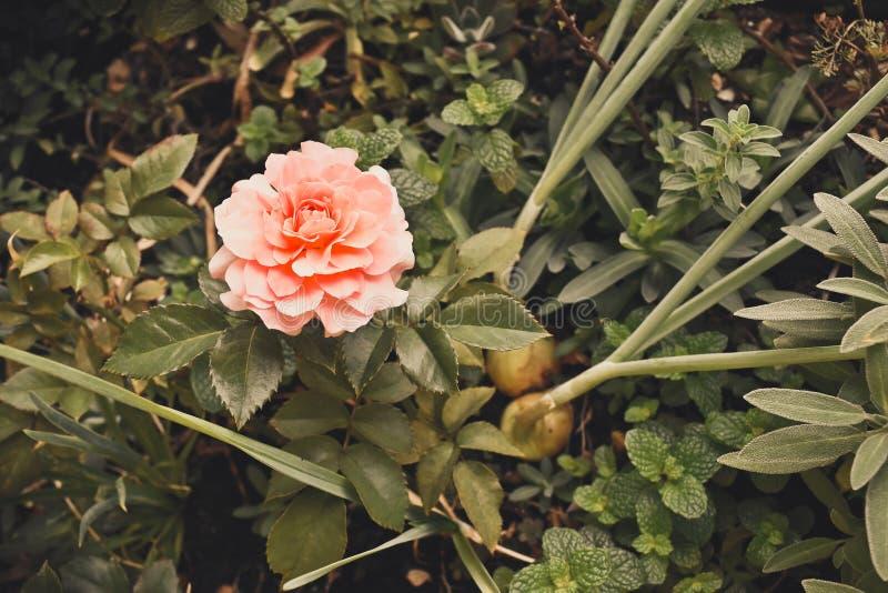 Cultivate perdió a tiempo fotografía de archivo libre de regalías
