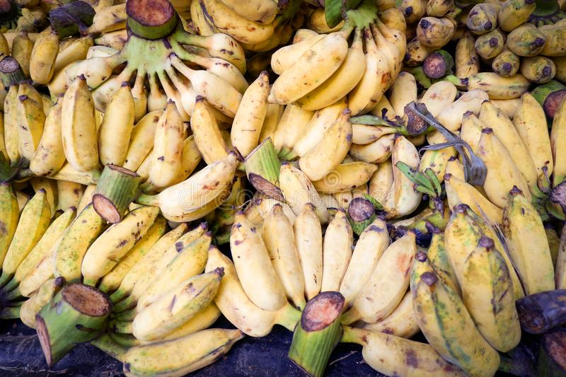 Cultivated banana fruit ripe background. Pile of fresh and delicious bananas royalty free stock photo