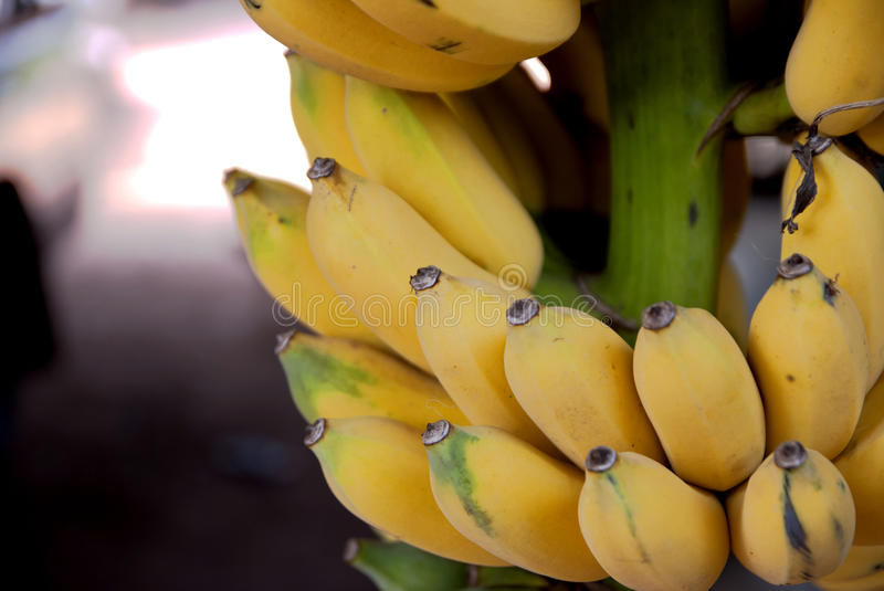 Cultivated banana in Thailand country stock image