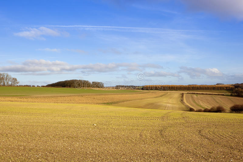 Cultivated farmland. Extensive newly sown wheat fields with hills and hedgerows in a yorkshire wolds farming landscape under a blue sky with fluffy white clouds royalty free stock photography