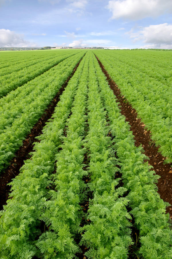 Download Cultivated field stock photo. Image of land, growth, farming - 29030500