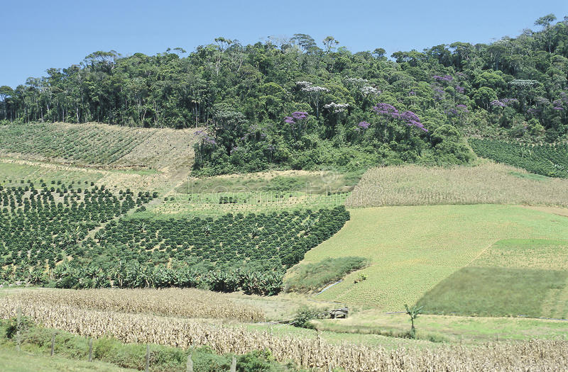 Cultivated fields and deforestation in southern Brazil. Cultivated fields in the state of Espirito Santo, south-eastern Brazil. The region is covered by a thick stock image