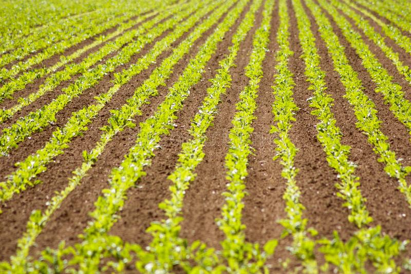 Cultivated fields detail stock photography