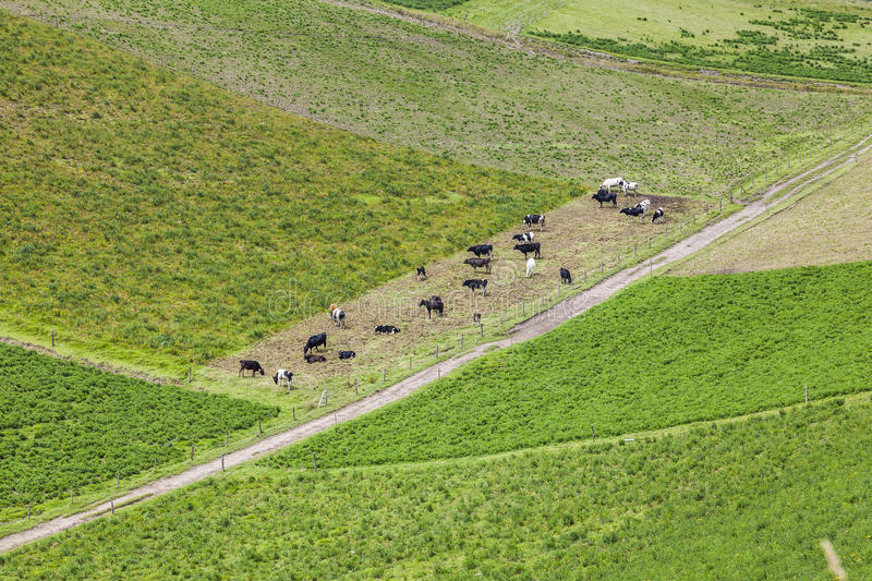 Cultivated fields on slopes stock images