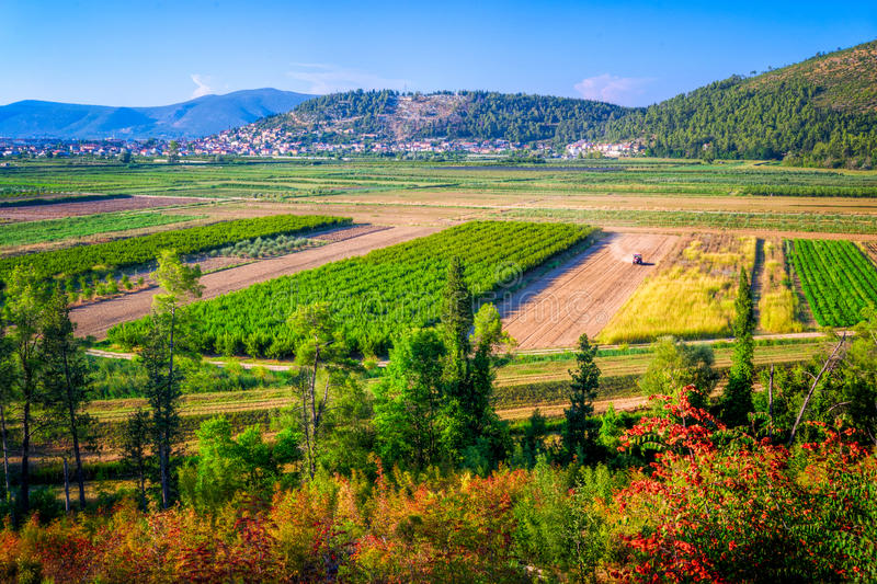 Cultivated fields in southern Croatia stock images