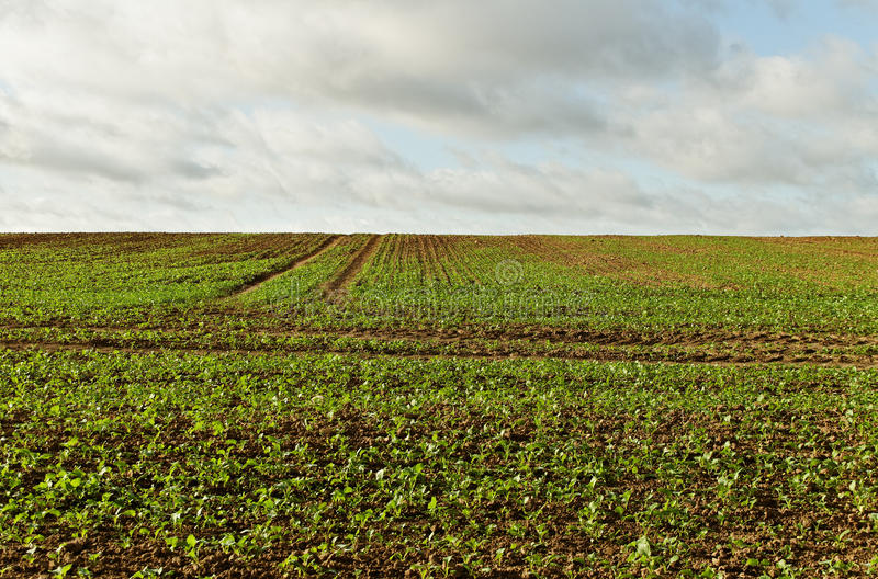 Download Cultivated hill. stock image. Image of blue, land, dirt - 24669871