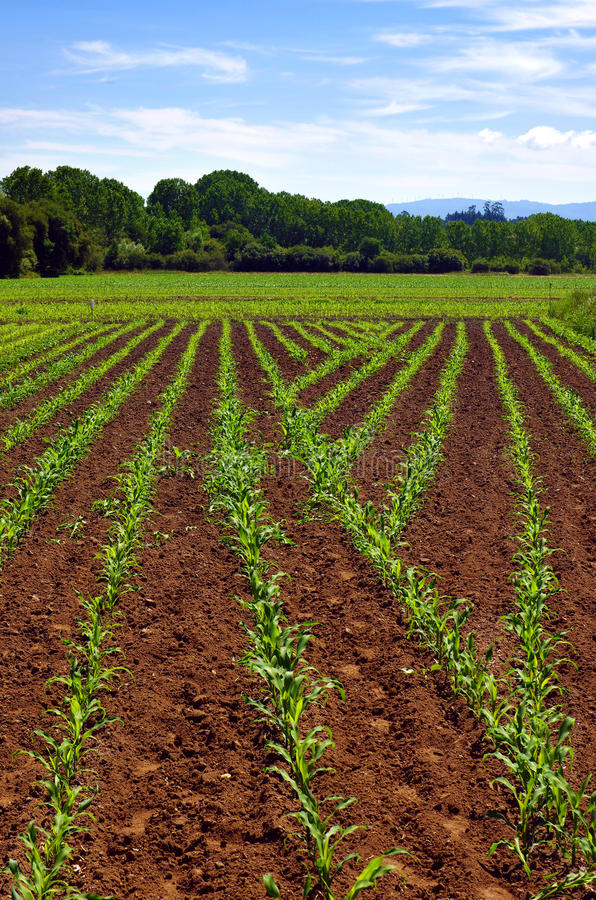 Cultivated land royalty free stock photo