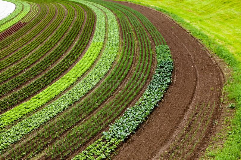 Cultivated land with vegetable patches stock photos