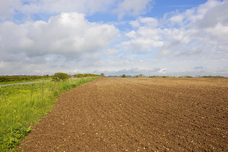 Cultivated soil and hedgerow. Chalky cultivated fields with a road grass verge and a hedgerow in the yorkshire wolds under a blue cloudy sky in springtime royalty free stock photo