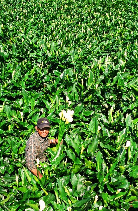 Cultivateur de fleur photo stock