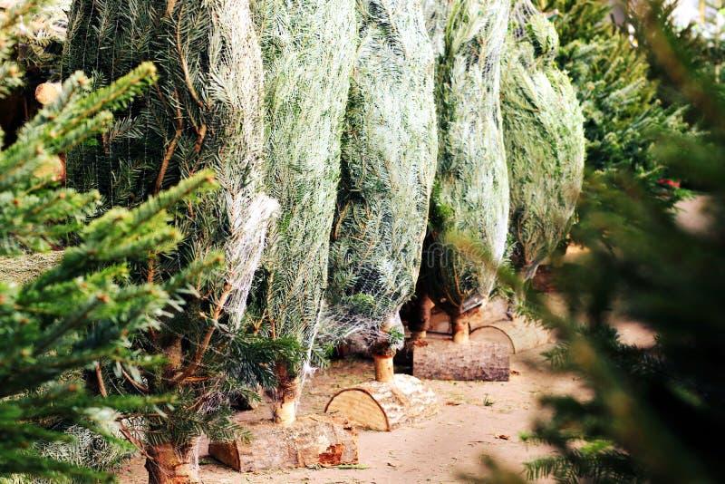 Cultivateurs de achat décembre de marché des affaires d'arbres de Noël image stock