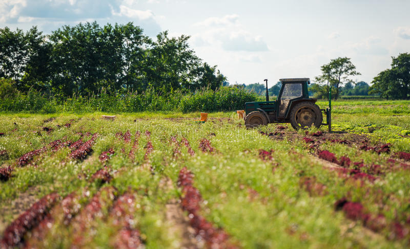 Download Cultivating Farmland stock image. Image of machinery - 26153457