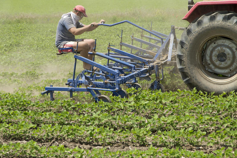 Cultivating field of young soybean crops with row crop cultivator machine.  stock photography