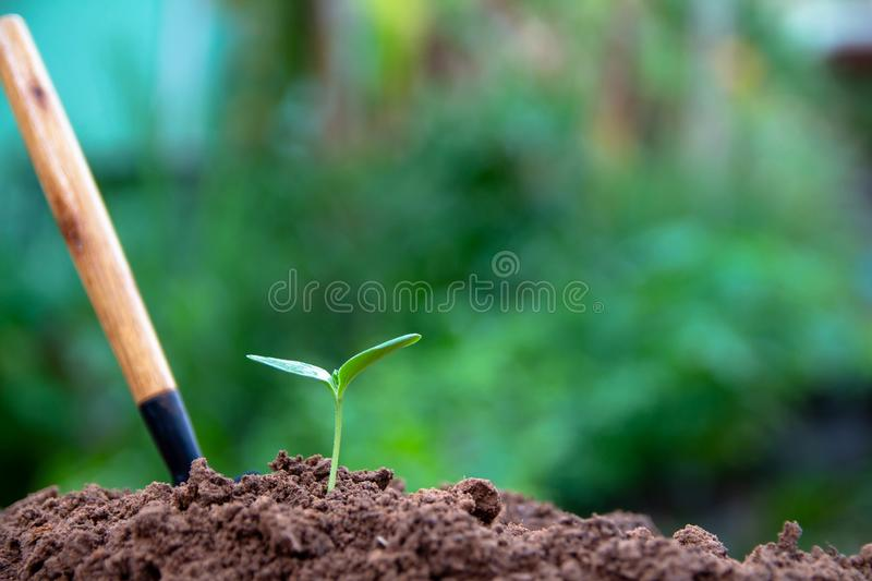 Cultivation of green trees stock image
