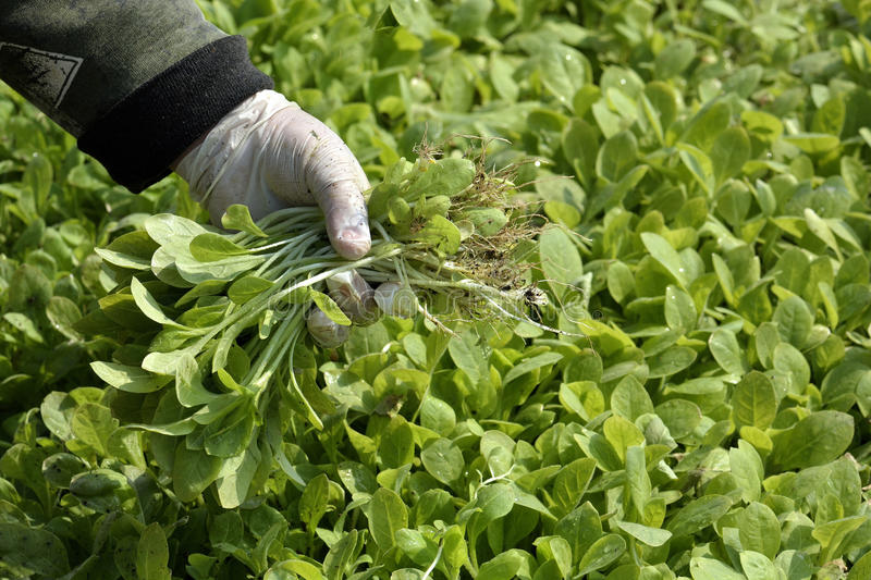 Cultivation stock photography image 30853482 for Less maintenance plants