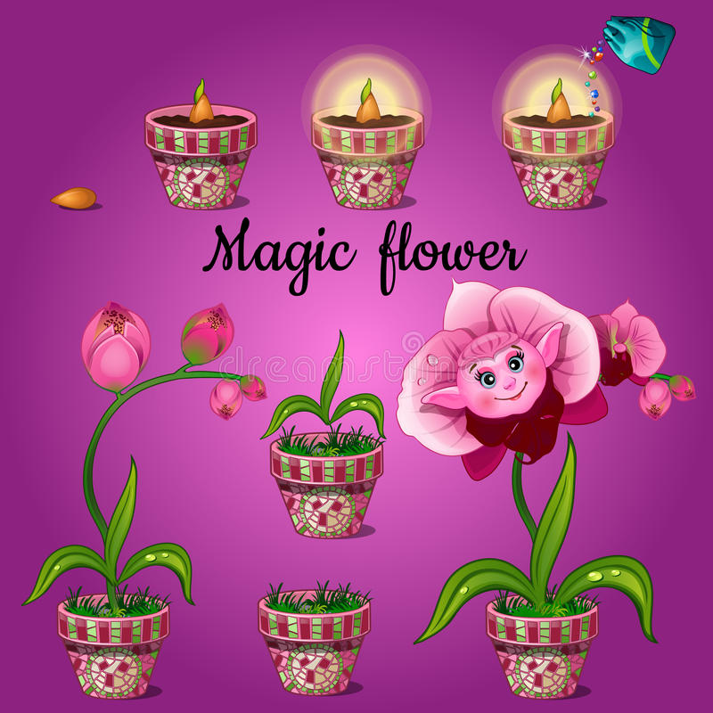 Cultivation stage magic Phalaenopsis vector illustration