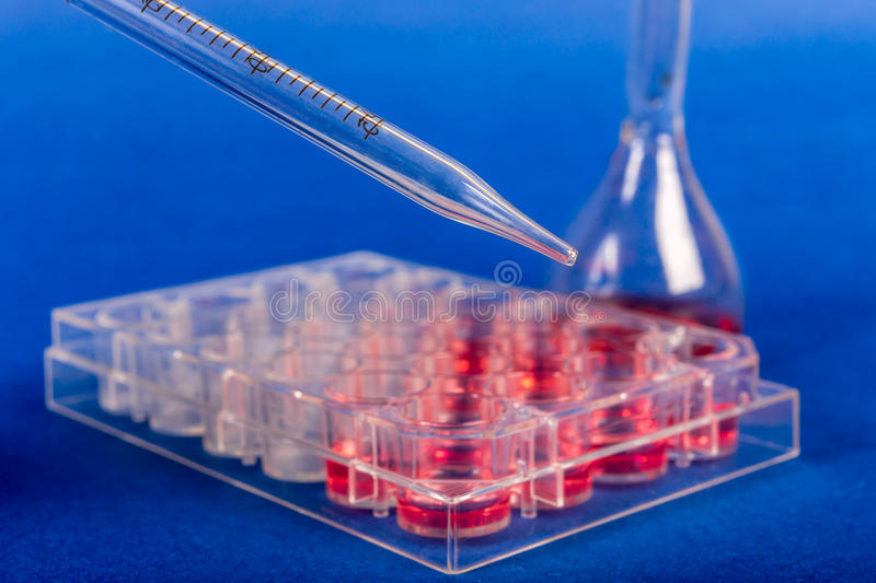 Cultivation of stem cells in sterile box. Human stem cells in biomedical scientific laboratory stock photography