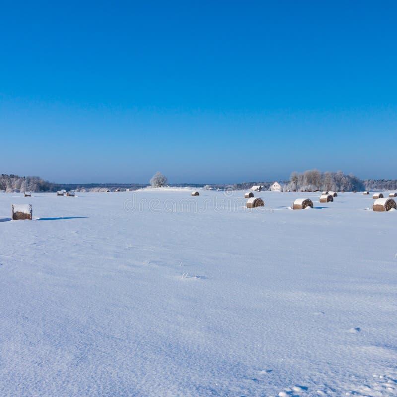 Cultive com um celeiro e os cavalos no inverno fotografia de stock