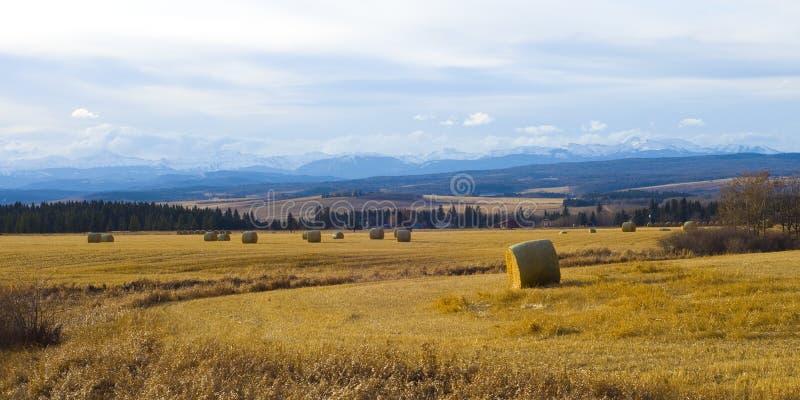 Cultive perto das montanhas rochosas fotografia de stock