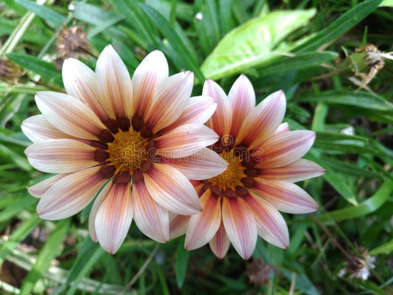 Cultive un huerto con las flores, detalles del jardín, verde, primavera, alegría de flores fotografía de archivo libre de regalías