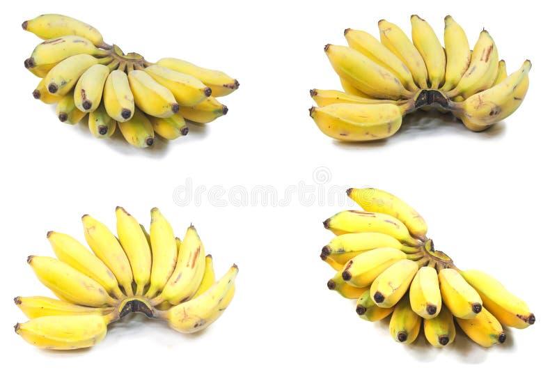 Cultiveer banaan royalty-vrije stock foto's