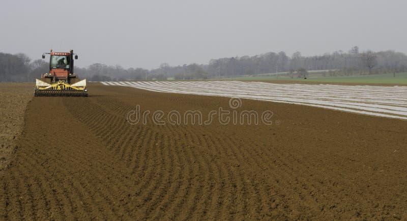 Cultiverend land en borend Maïs stock foto's