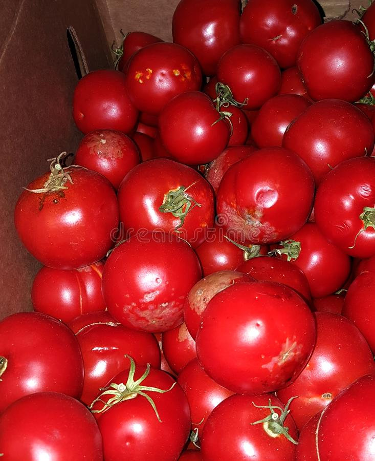 Cultivez la boîte fraîche de tomates mûres pour la sauce photos libres de droits