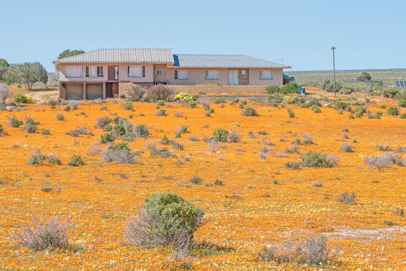Cultivez la maison en mer des fleurs sauvages photo libre de droits