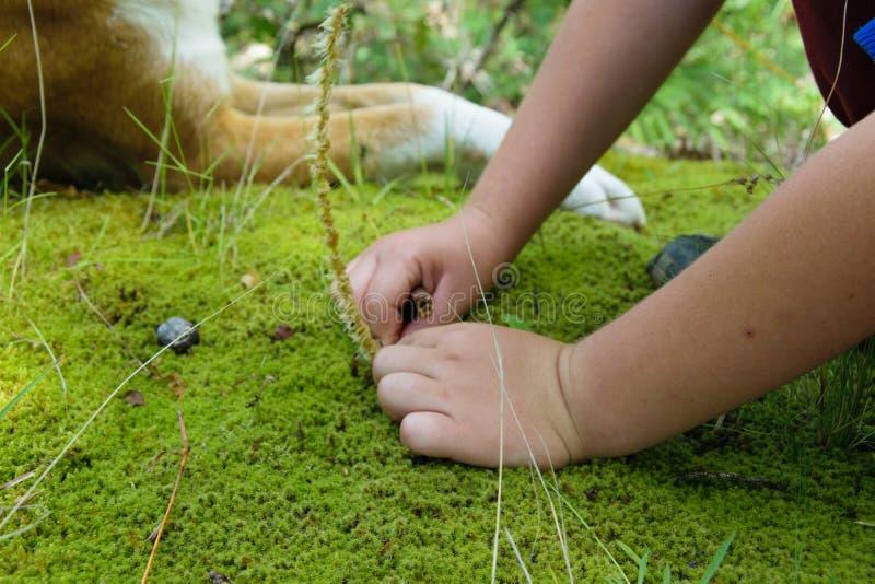 Cultivez la vue des mains d'enfant jouant avec de la mousse verte et les fleurs sauvages photos libres de droits