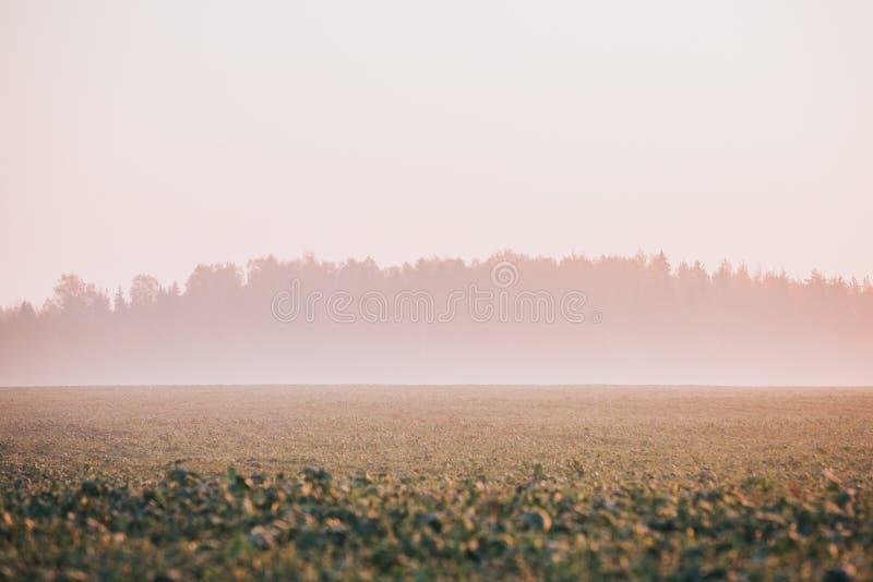 Cultivez le champ avec la forêt à l'arrière-plan couvert en brouillard Scène de début de la matinée d'automne photographie stock libre de droits