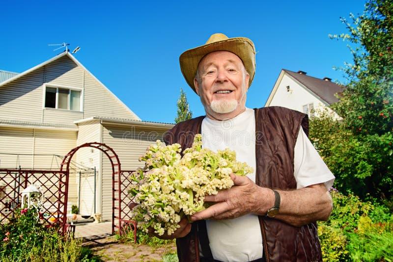 Cultivez un chou-fleur photos stock