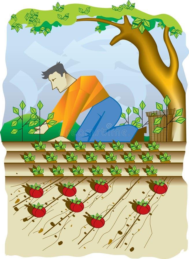 Cultivo stock de ilustración
