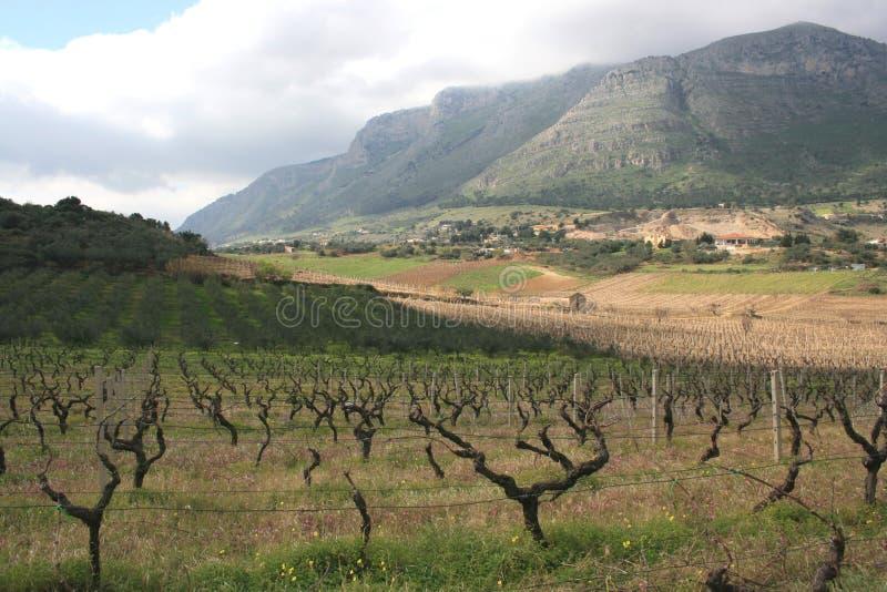 Cultivo & montagem dos vinhedos. Sicília fotografia de stock