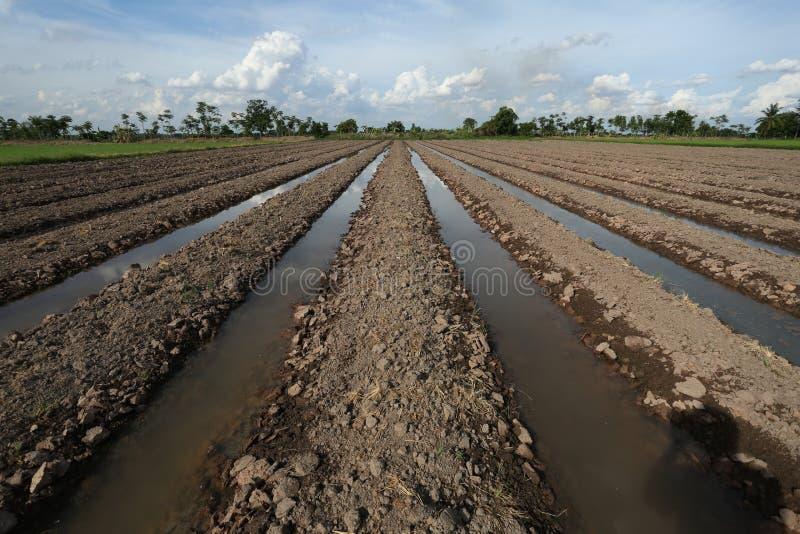 Cultivo da planta do solo da terra fotos de stock royalty free