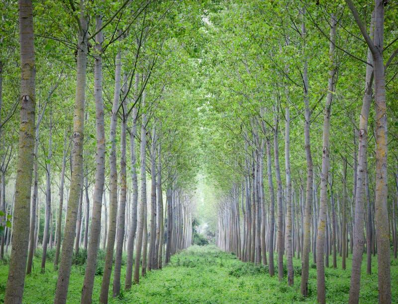 Cultivo das árvores fotografia de stock