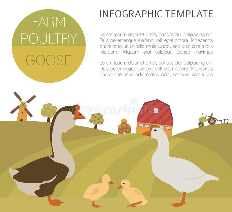 Cultivo de aves domésticas Família do ganso no branco Projeto liso ilustração stock