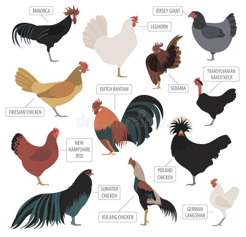 Cultivo de aves domésticas A galinha produz o grupo do ícone Projeto liso ilustração stock