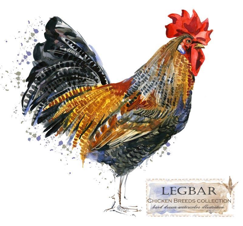 Cultivo de aves domésticas A galinha produz a série ilustração doméstica da aquarela do pássaro ilustração stock