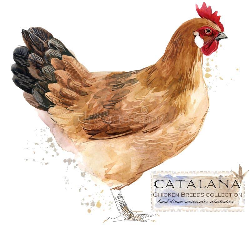 Cultivo de aves domésticas A galinha produz a série ilustração doméstica do pássaro da exploração agrícola ilustração royalty free