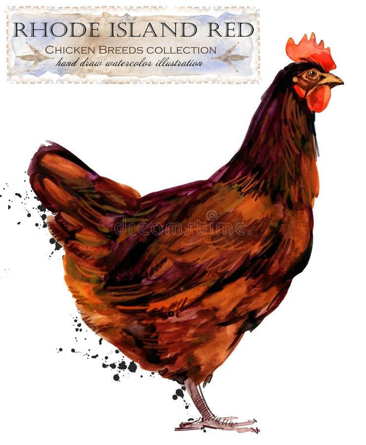 Cultivo de aves domésticas A galinha produz a série pássaro doméstico da exploração agrícola ilustração royalty free