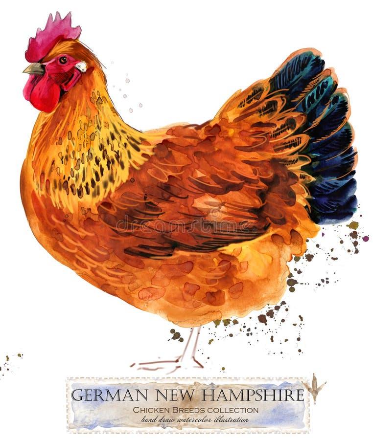 Cultivo de aves domésticas A galinha produz a série pássaro doméstico da exploração agrícola ilustração do vetor