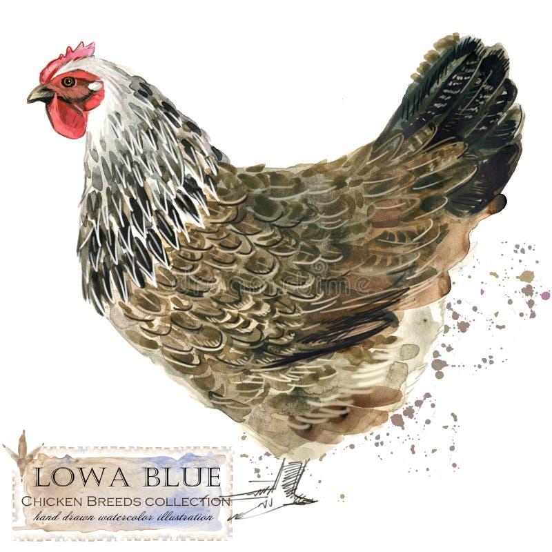 Cultivo de aves domésticas A galinha produz a série pássaro doméstico da exploração agrícola ilustração stock