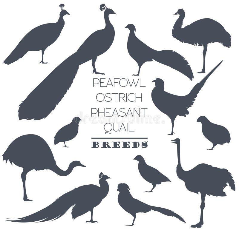 Cultivo de aves domésticas O Peafowl, avestruz, faisão, codorniz produz o ícone s ilustração stock
