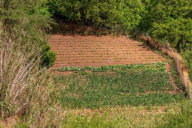 Cultivo de diversas verduras en un pequeño campo en las montañas de Gran Canaria fotos de archivo libres de regalías