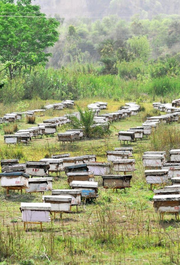 Download Cultivo de la abeja imagen de archivo. Imagen de verde - 8894971
