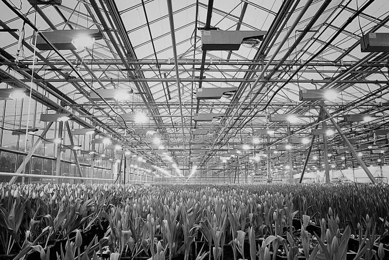 Cultivo de la flor imagen de archivo libre de regalías