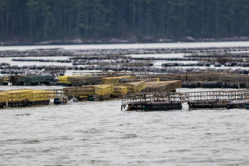 Cultivo de la ostra y trampas de la ostra a lo largo del río de Damariscotta en Maine fotos de archivo libres de regalías