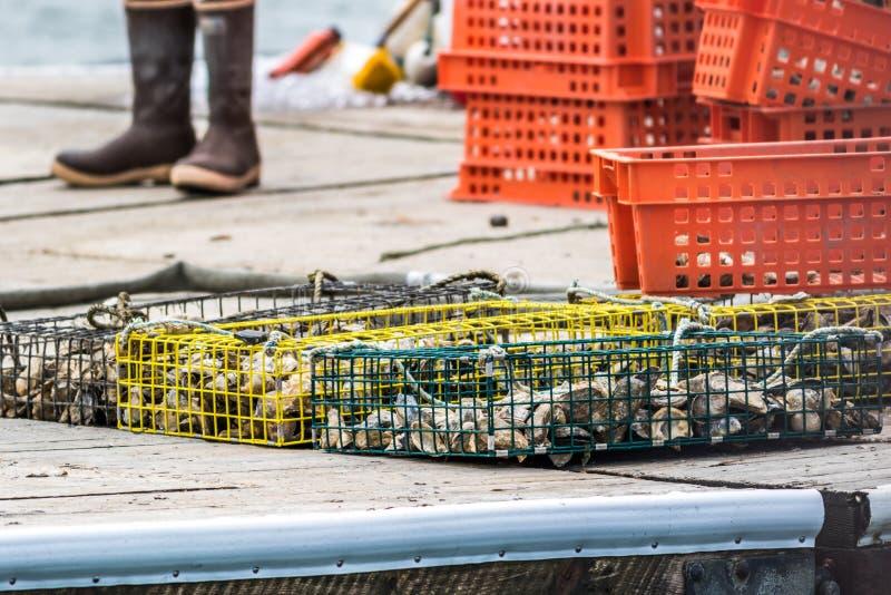 Cultivo de la ostra y trampas de la ostra a lo largo del río de Damariscotta en Maine fotos de archivo