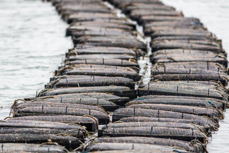 Cultivo de la ostra y trampas de la ostra a lo largo del río de Damariscotta en Maine imagen de archivo